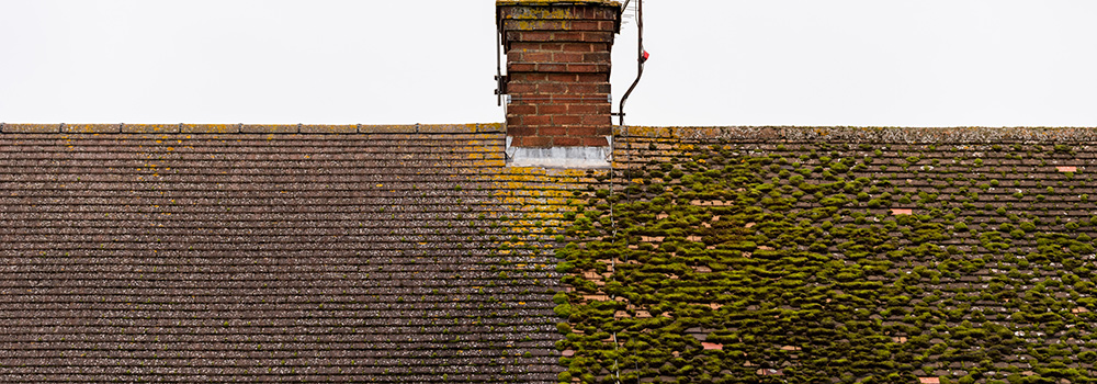 Do I Need A New Roof If I Have Discolored Shingles Executive Roof Services